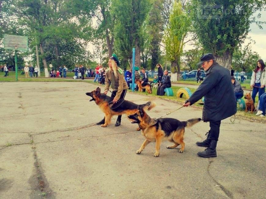 Кинологическое и конное шоу ко дню пограничника в Никополе, фото-6
