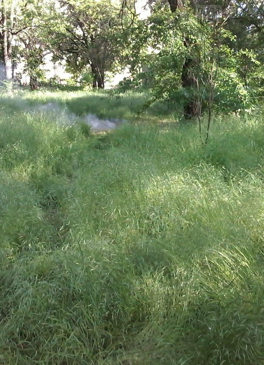 Трава по пояс в никопольских парках, фото-1