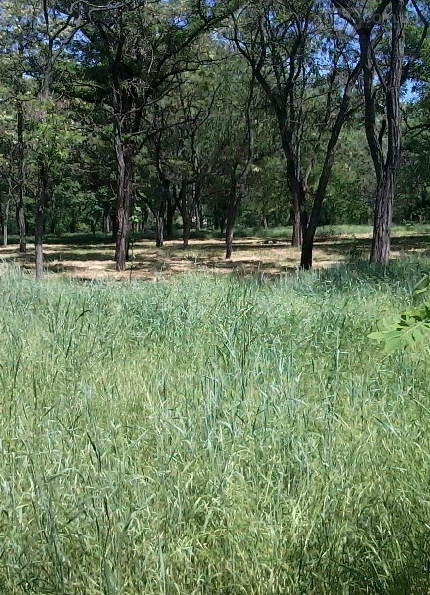 Трава по пояс в никопольских парках, фото-4
