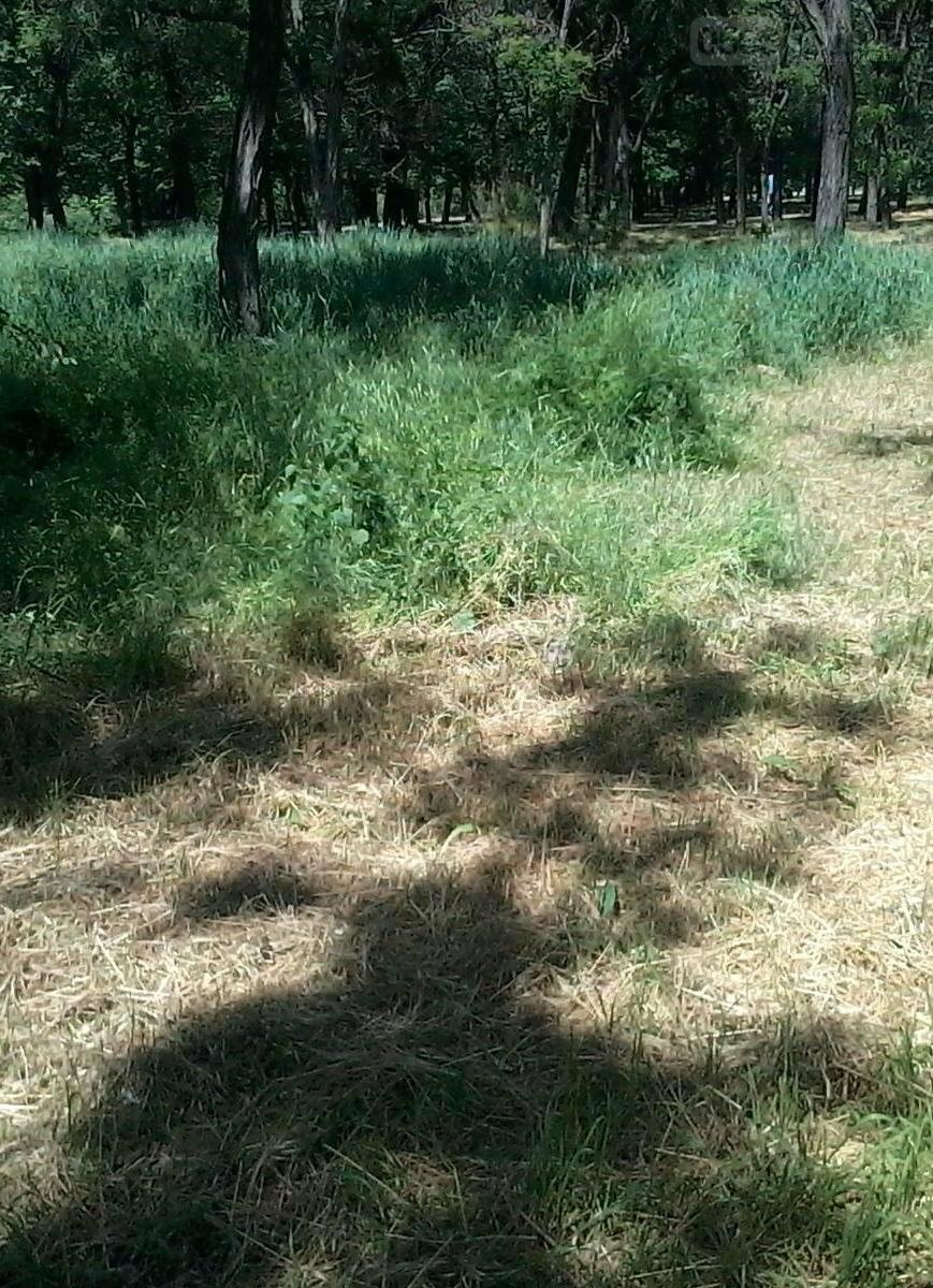 Трава по пояс в никопольских парках, фото-3