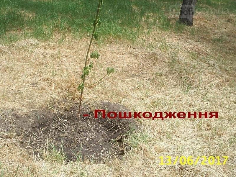 11 тисяч квітів, покошена трава, политі дерева: Що відбувається в Нікополі , фото-3