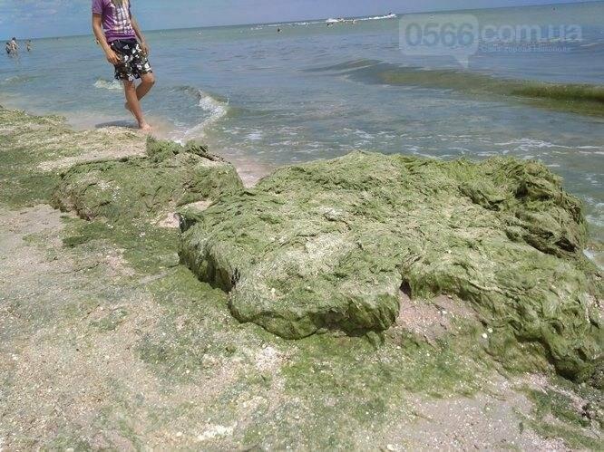Собрались на отдых: Азовское море у побережья Кирилловки и Геническа превратилось в болото, фото-2