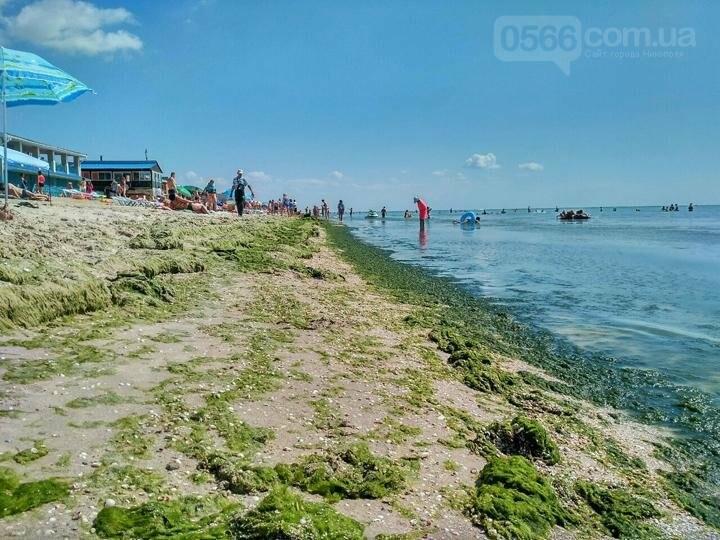 Собрались на отдых: Азовское море у побережья Кирилловки и Геническа превратилось в болото, фото-3