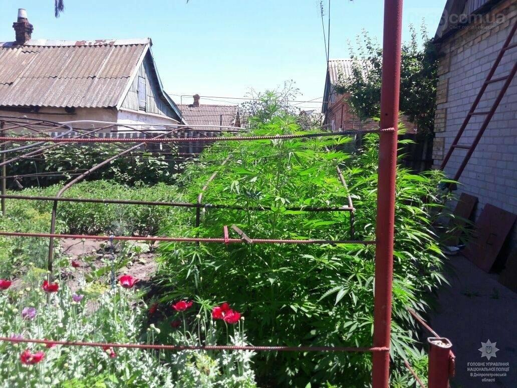Нікопольськими правоохоронцями було виявлено 80 кущів конопель, 3 кг сухої трави та амфетамін, фото-2