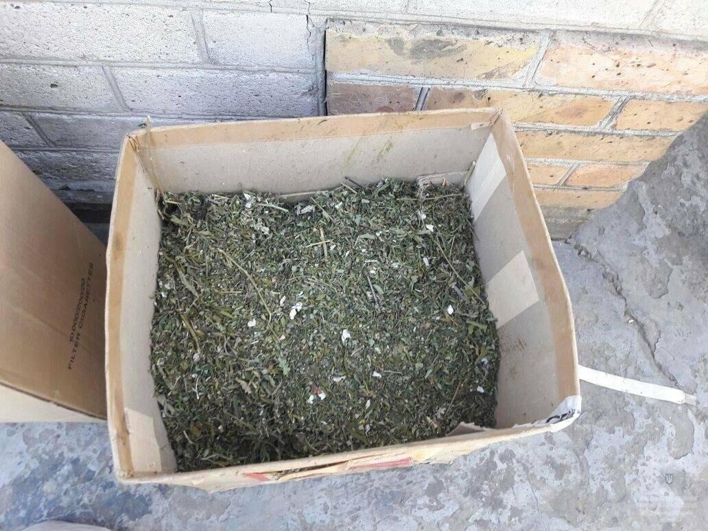 Нікопольськими правоохоронцями було виявлено 80 кущів конопель, 3 кг сухої трави та амфетамін, фото-4
