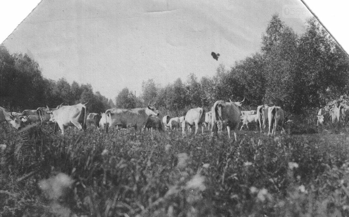 Старые черно-белые фотографии из семейного архива никопольчан, фото-1