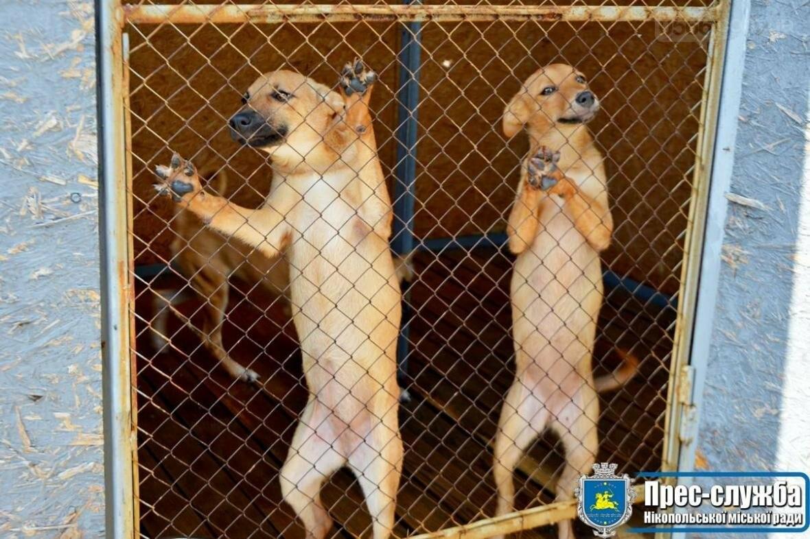 В Нікополі безпритульні собаки мають шанс на життя завдяки небайдужим, фото-1