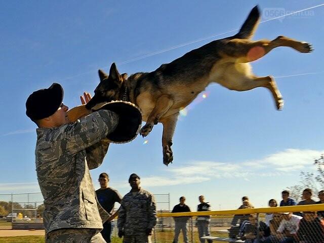 Собака всегда ли друг человека?, фото-1