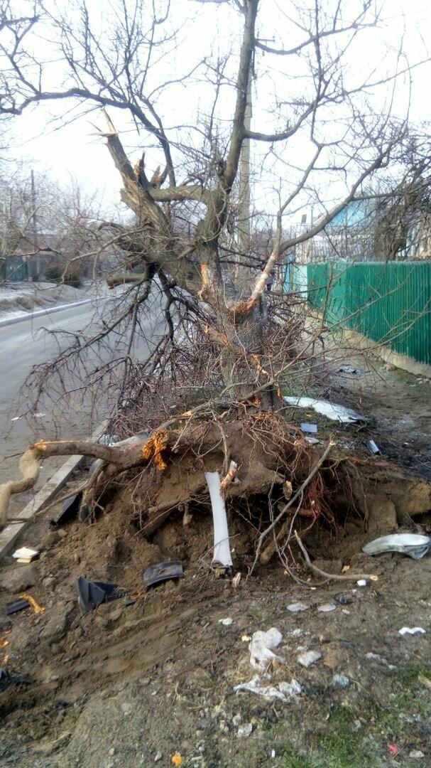 ДТП в Никополе: автомобиль врезался в дерево, есть пострадавшие, фото-5